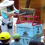 Ενας Μελισσοκόμος, Μια Ανοιξιάτικη Ημέρα…